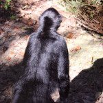 Blackie, Spider monkey