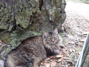 Catta, Domestic cat