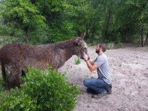 Beercan, Donkey