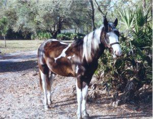 Chief, Horse